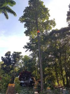 cairns tree removal