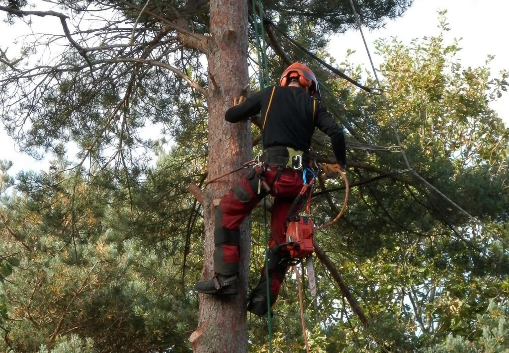 tree lopping cairns